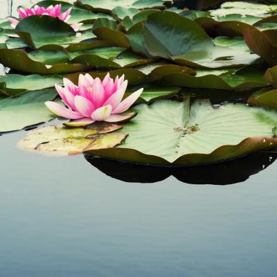 Pond life: how to create the perfect water feature for your garden
