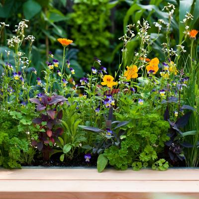 How to grow an edible flower patch