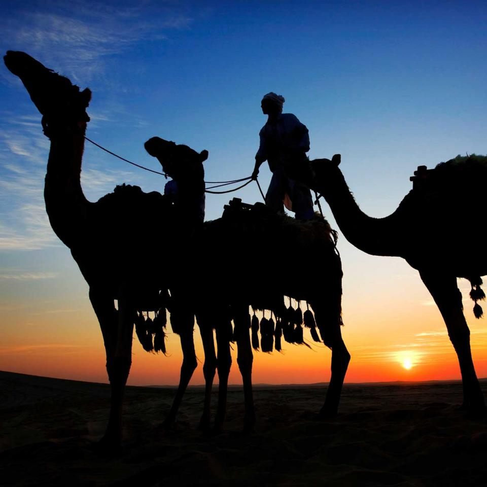 Camels-at-Sunset