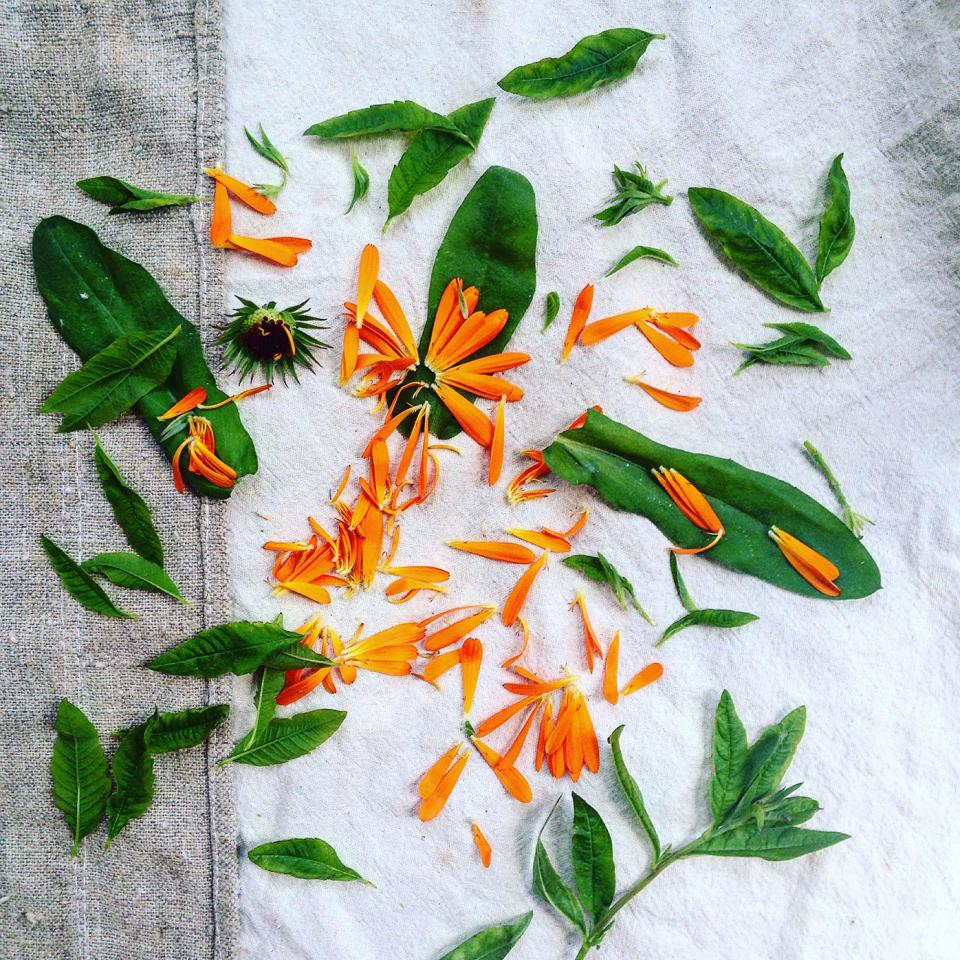 Calendula-and-lemon-verbena-garden-foraged-detox-tea